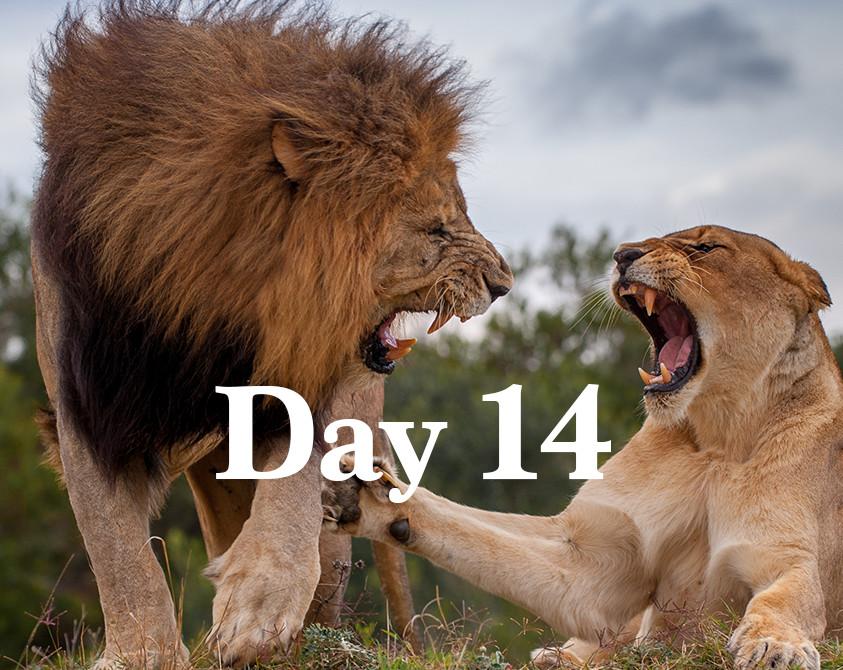 day14.jpg