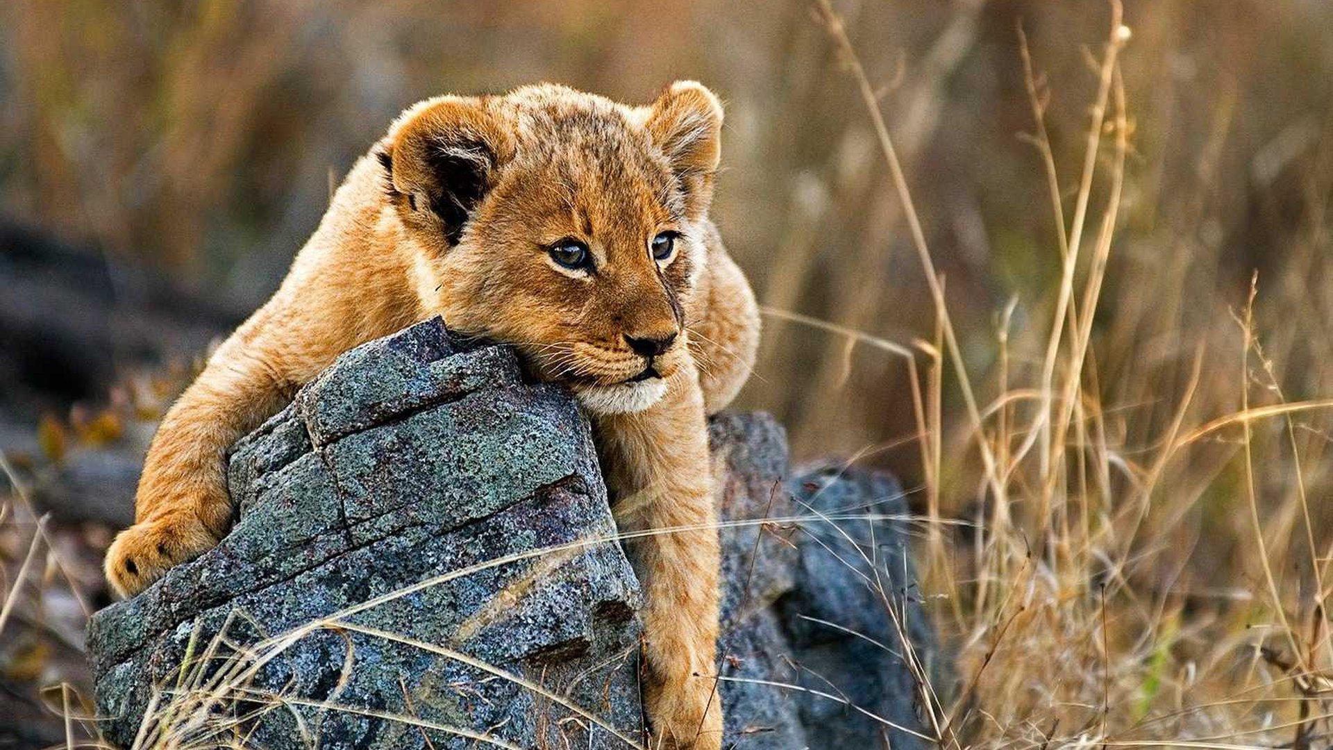 Londo Cub.jpg