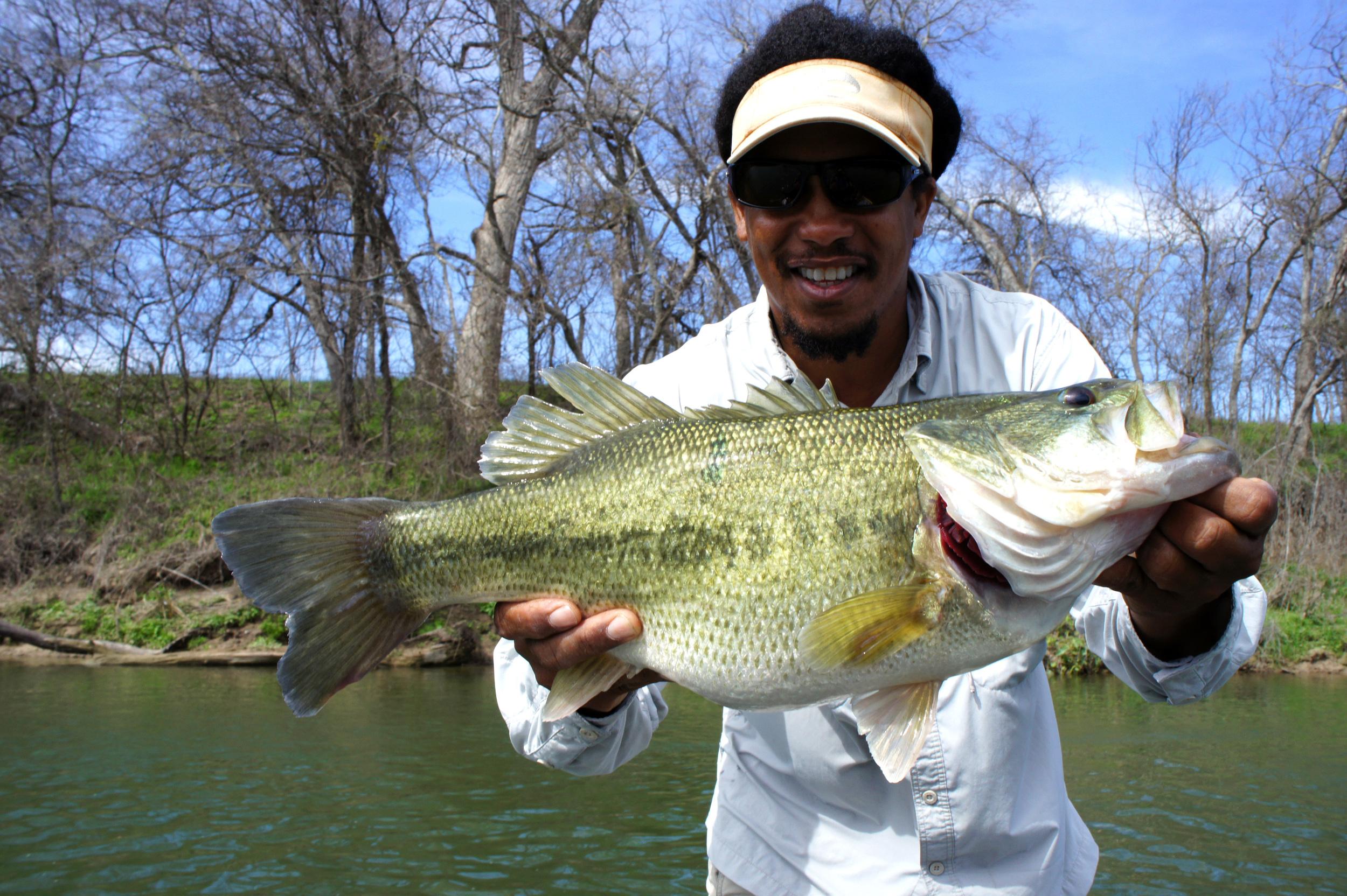 Huge Colorado River Bass