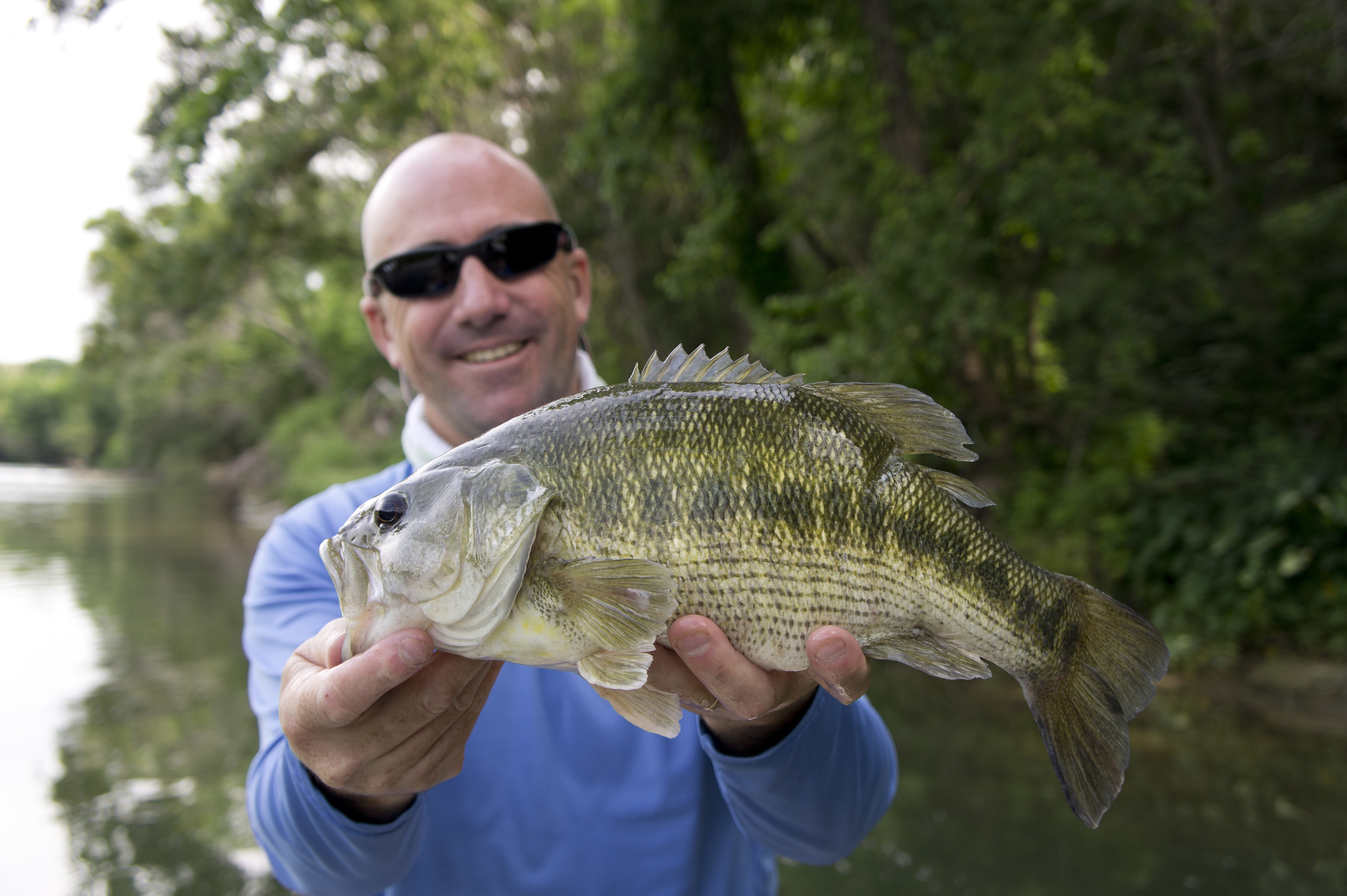 Huge Guadalupe bass
