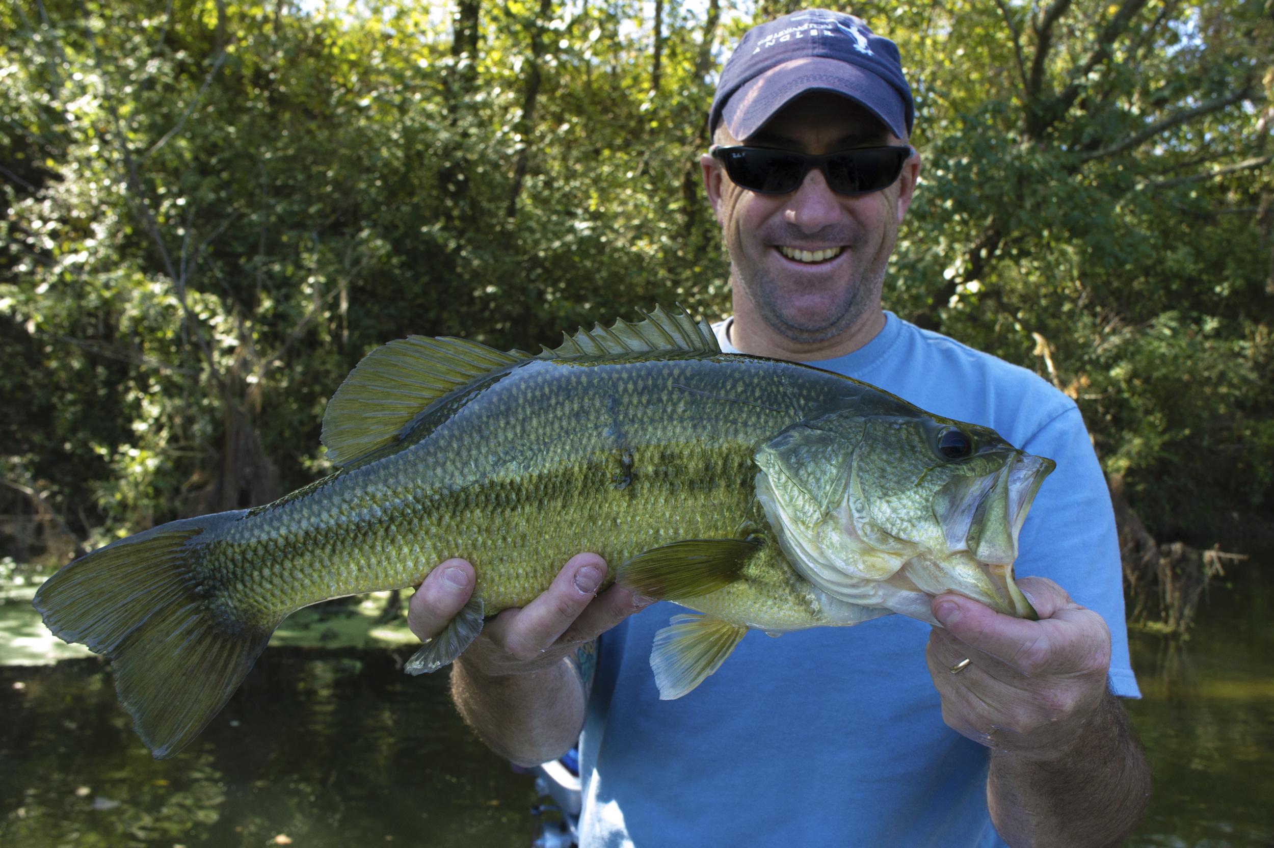 Colorado River Largemouth Bass