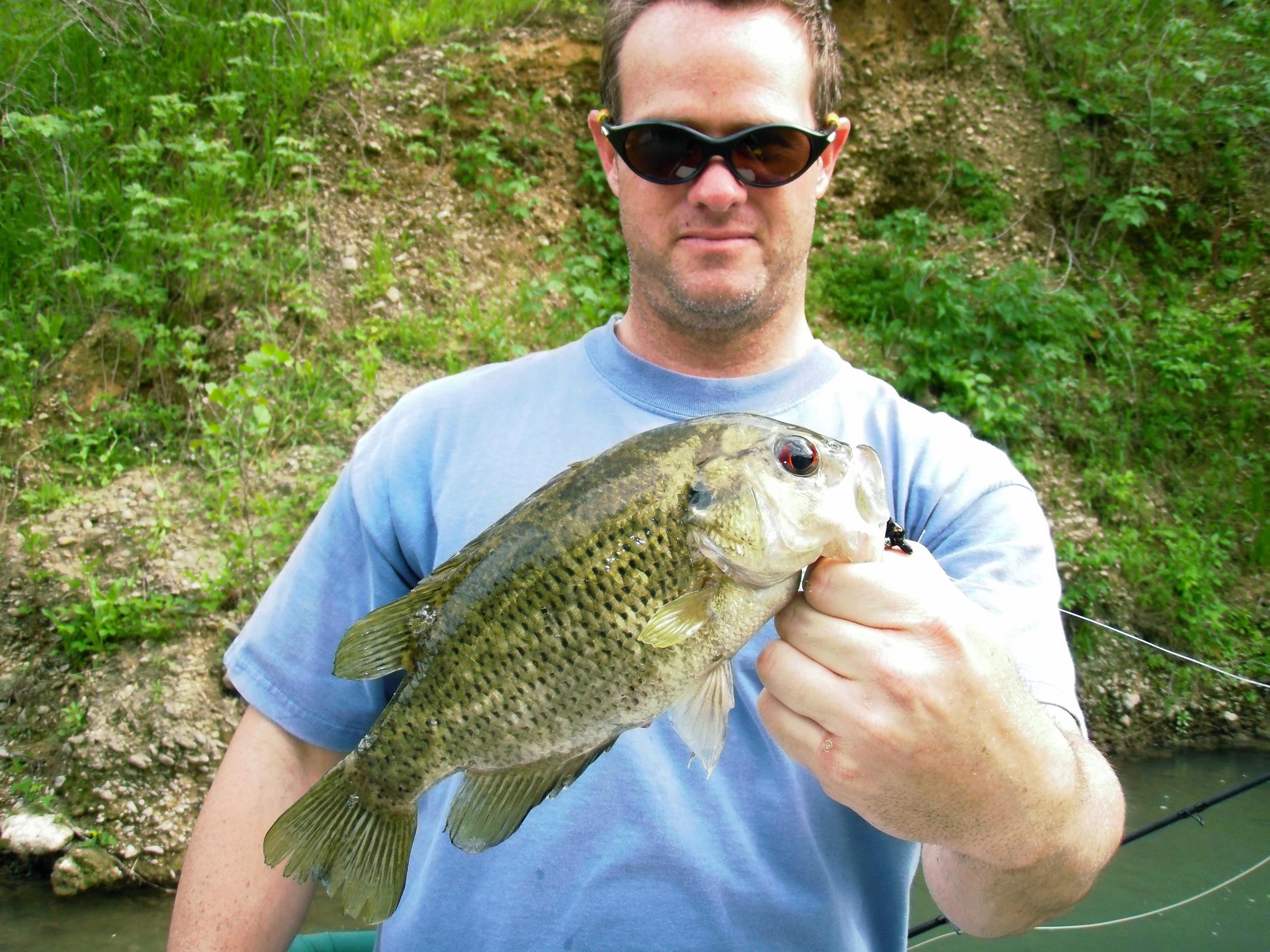 San Marcos Rock Bass