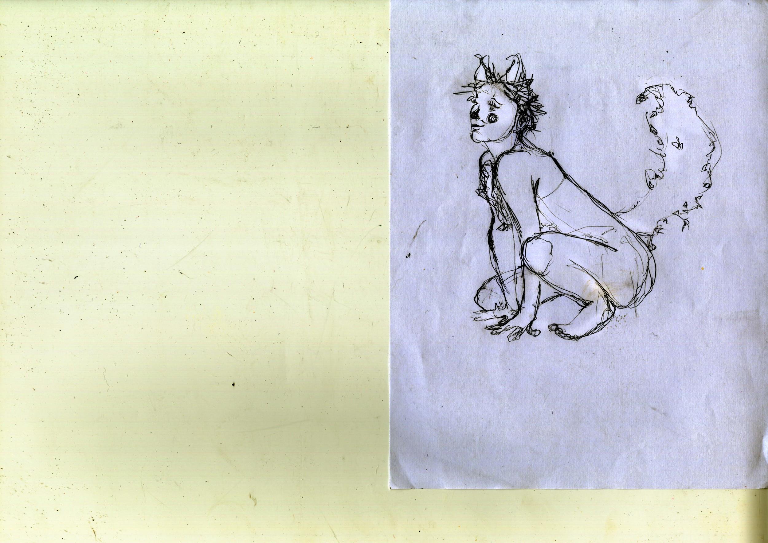 The Fox Sketch