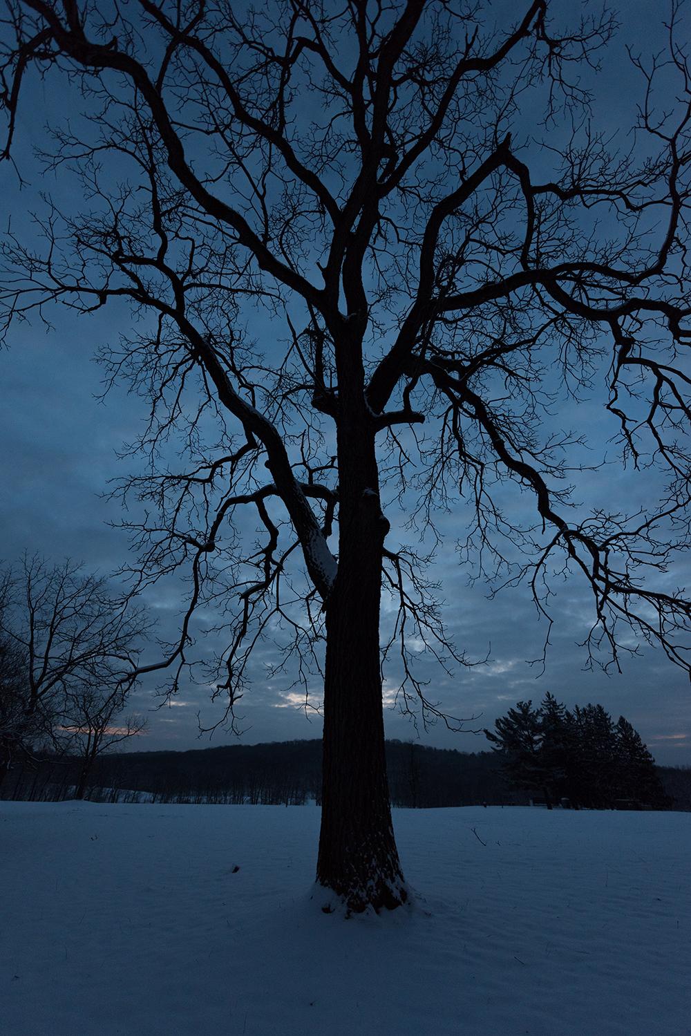 2019-03 Hartwood  Acres Snow (16) FIX.jpg