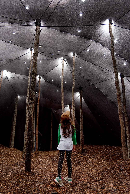 Forêt, Ronan Virondaud, Mathilde Leveau