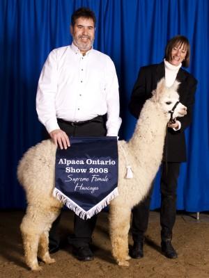 Stephen and Marj Brady rear prize winning alpaca.