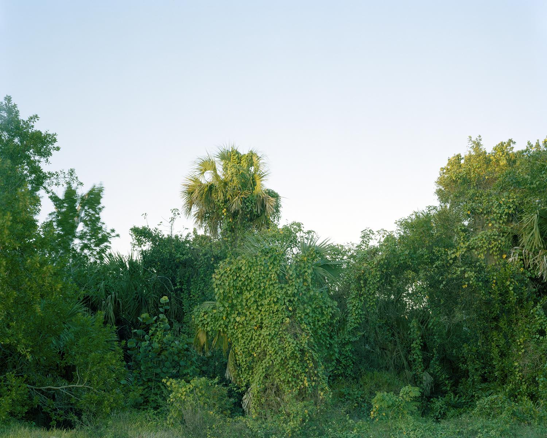 OvergrowthNumber2.jpg