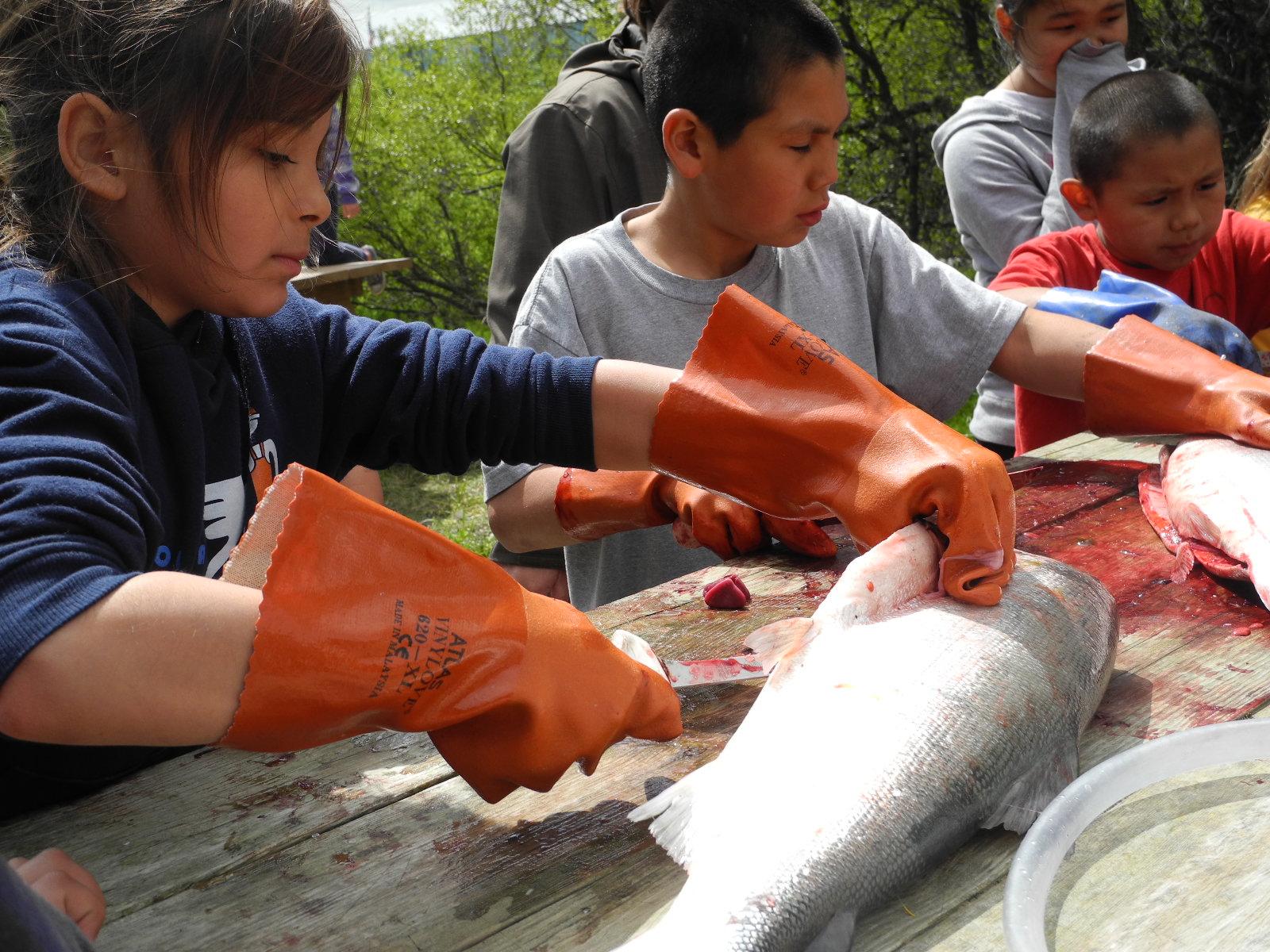 Children cutting fish at the Curyung Tribal Culture Camp in Dillingham, AK.