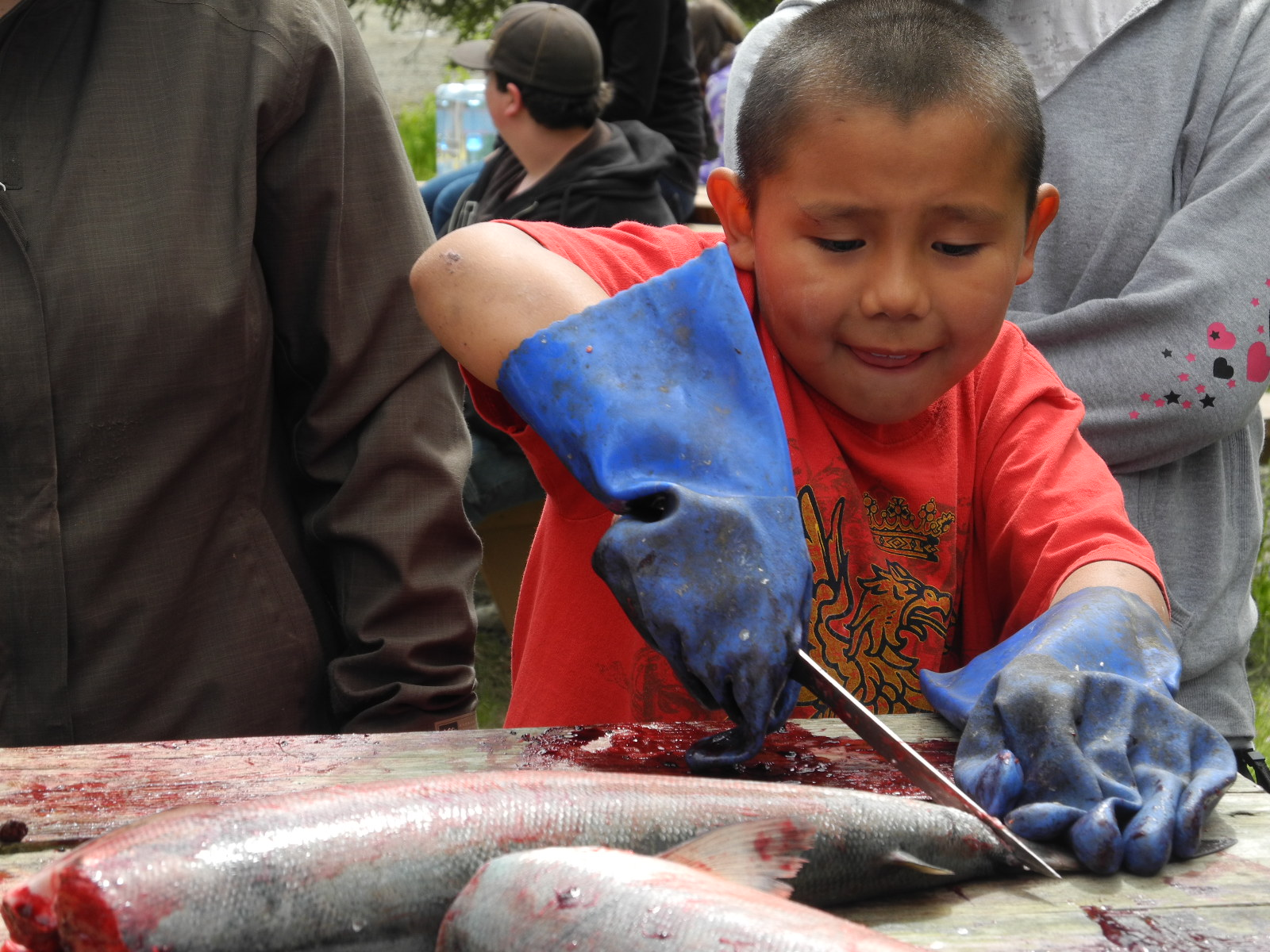 Young boy cuts fish at the Curyung Tribal Culture Camp in Dillingham, AK.