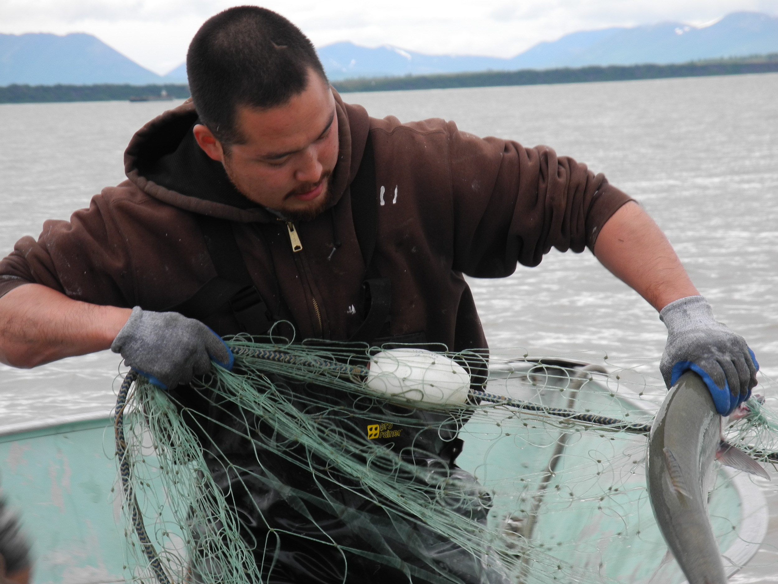 Pulling salmon from the net