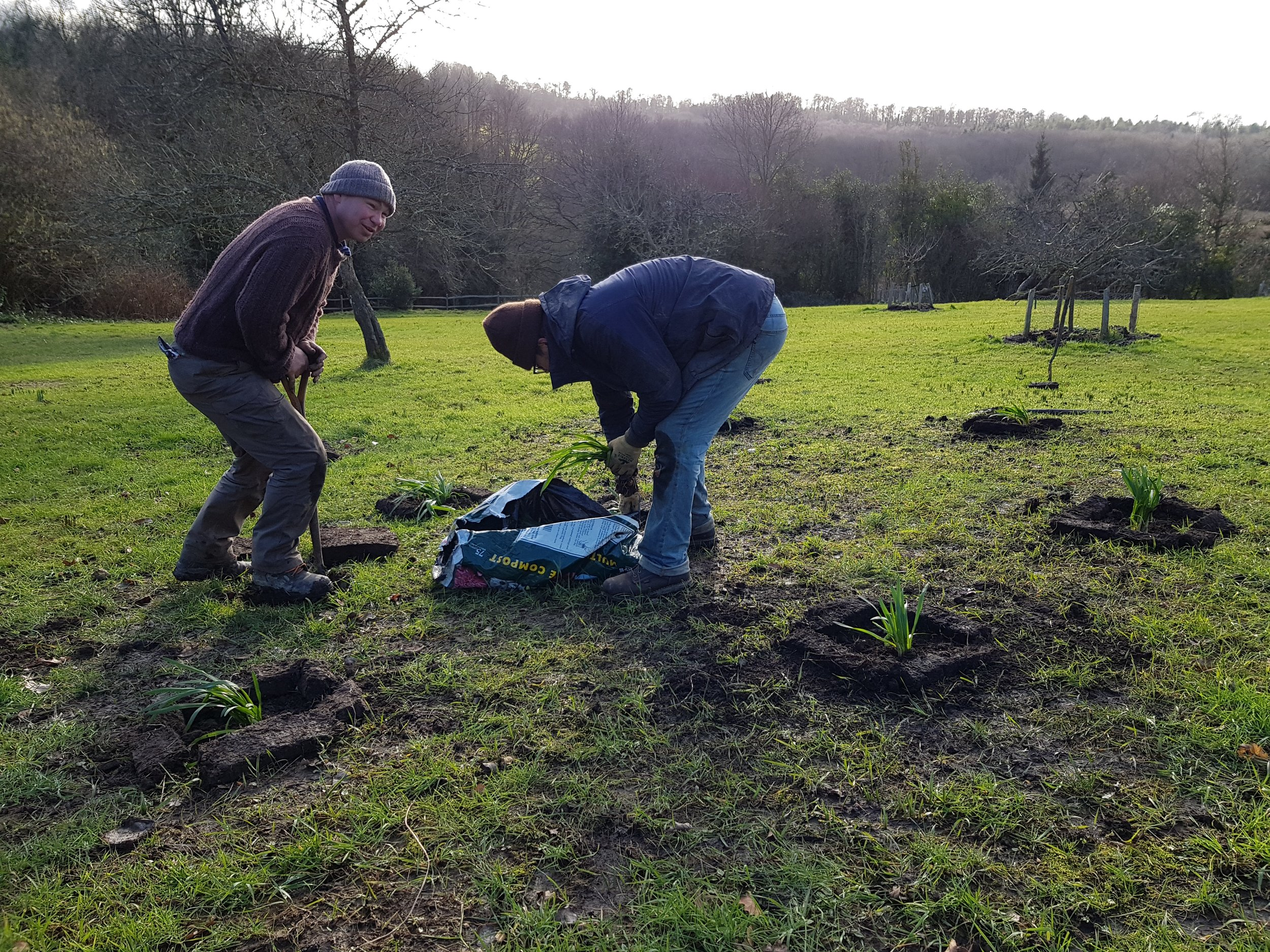 Tom and Shem in the orchard planting out Leucojum (snowflakes) .