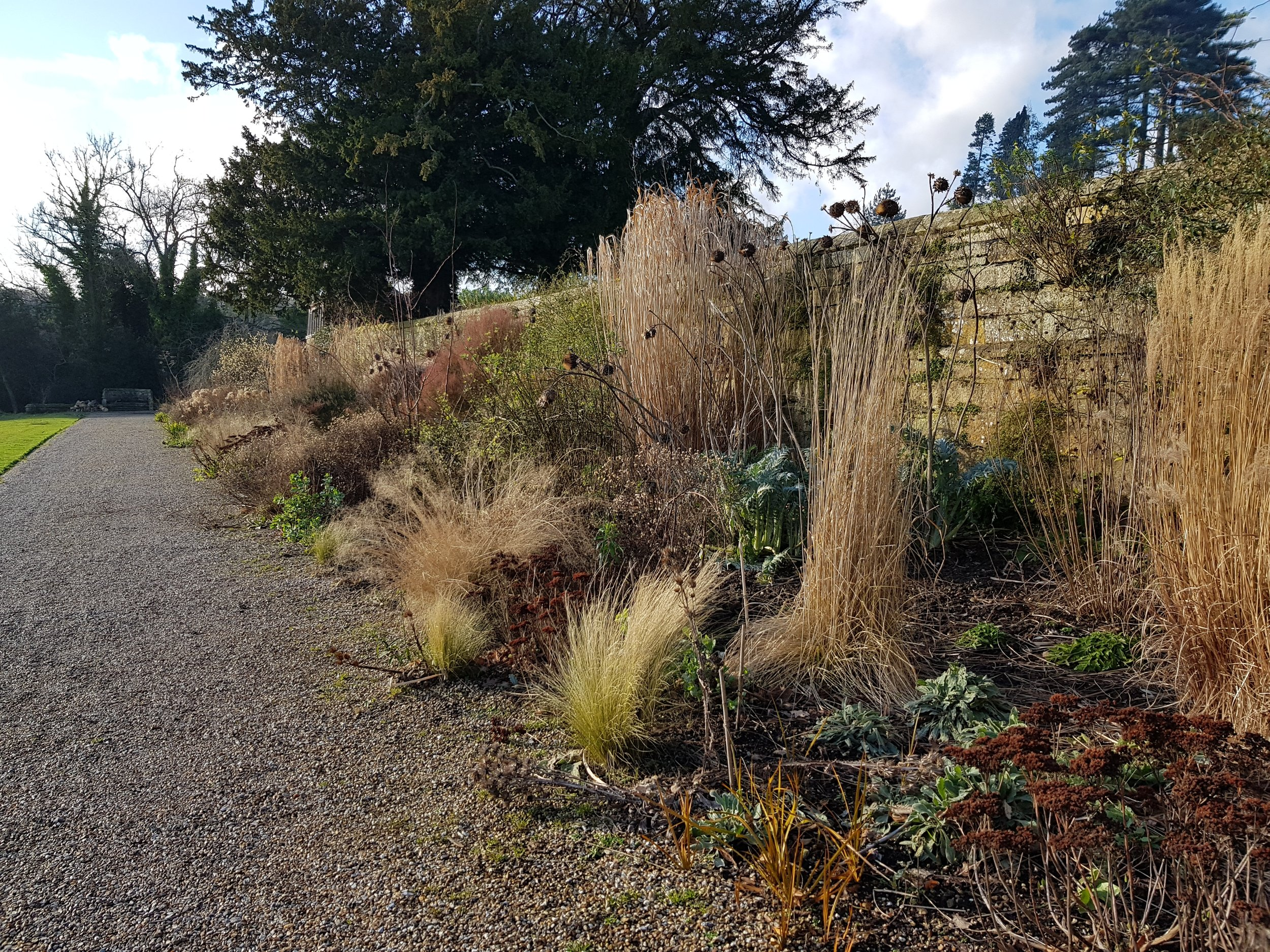 The long border next to the meadow still looking good in late January.