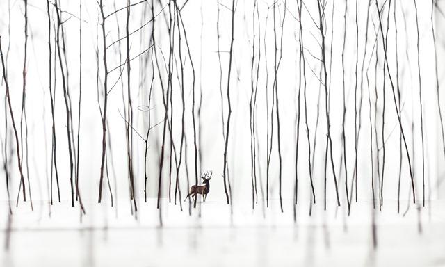 murphystaginwoods.jpg