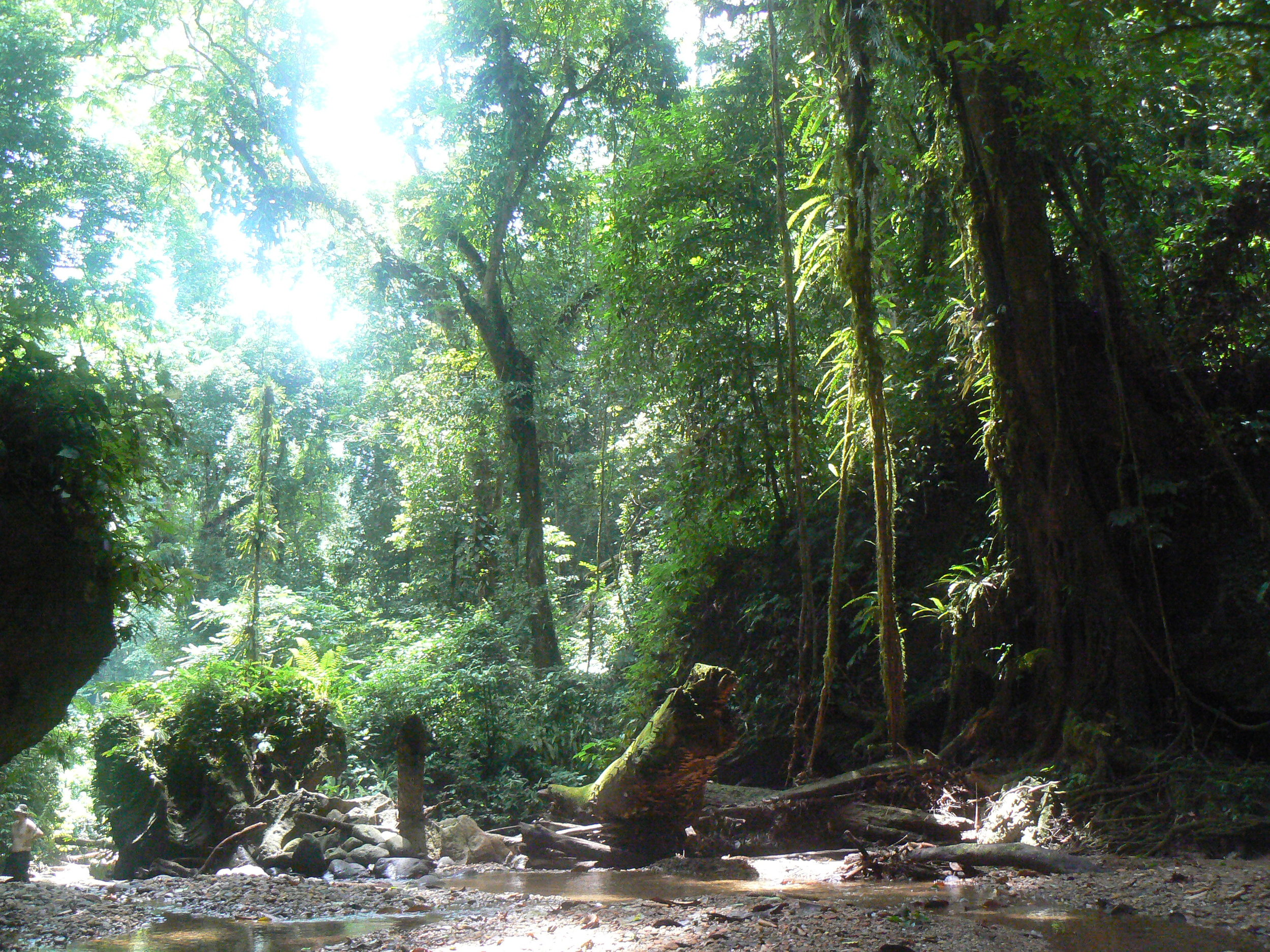 7 day WILDERNESS trekBatu ronggring - Bukit Kencur - Bukit Lawang. - currently being updated* CONTACT US FOR FURTHER INFO