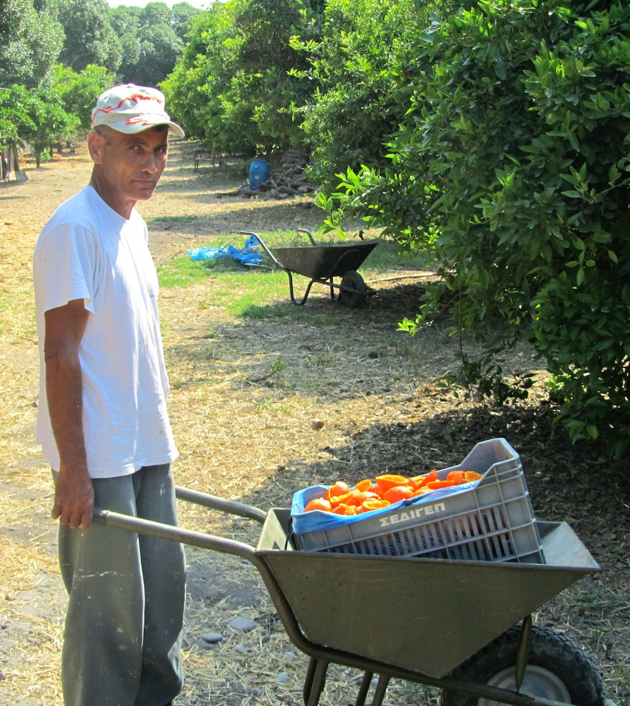 Orchard worker