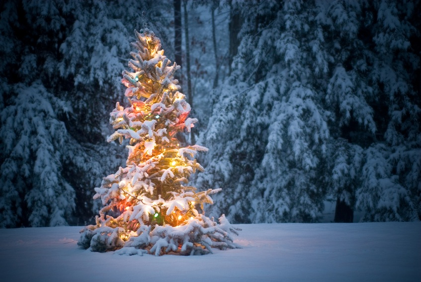 Christmas Tree Fair.jpg