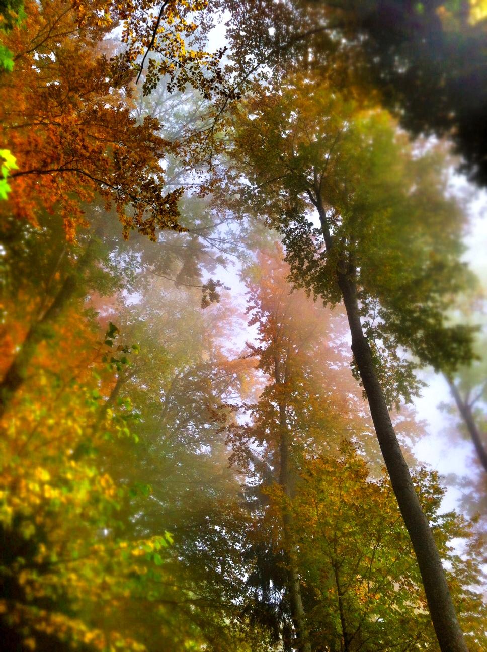 Cloud forest Alps.JPG