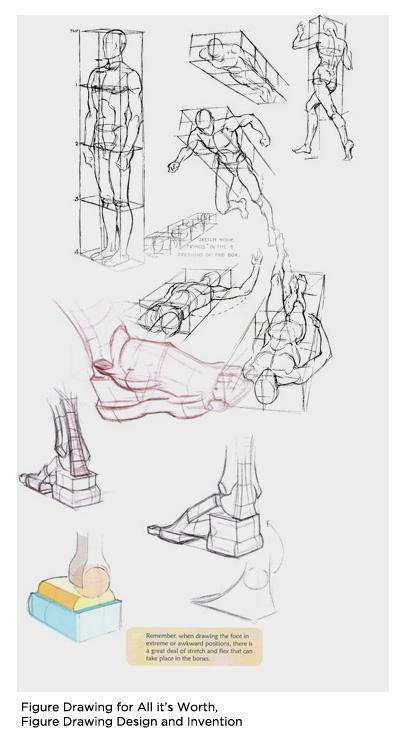 constructive_anatomy.jpg
