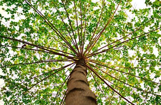 Shade Tree.jpeg