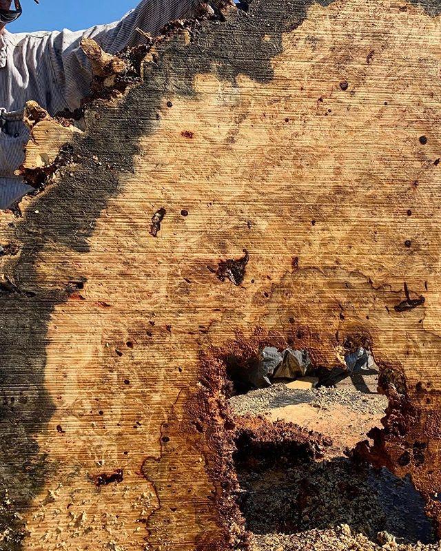 Salvaged some pieces today. 🌳#witthardwoods #buckeyeburl