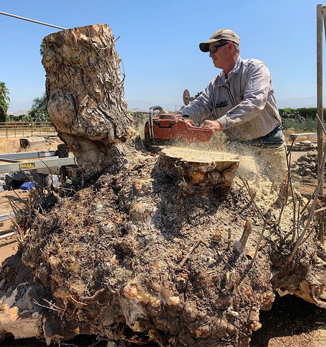 🌳 This is Big Bertha, she was sold before she was cut. She grew around a big rock pile. Big Bertha allowed us to study and learn even more about California Buckeye trees and the way they grow. Everyday we learn more and more about this magical species of wood and it is exciting! Happy Monday! 🌳 #witthardwoods #buckeyeburl