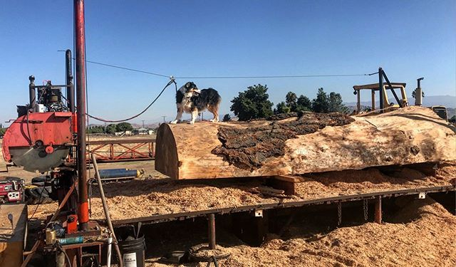 🌲If you are need of lumber, don't forget to call us! Our logs are locally sourced from our Sequoia National Forest. Call 559-310-1291 to place an order. 🌲 #witthardwoods