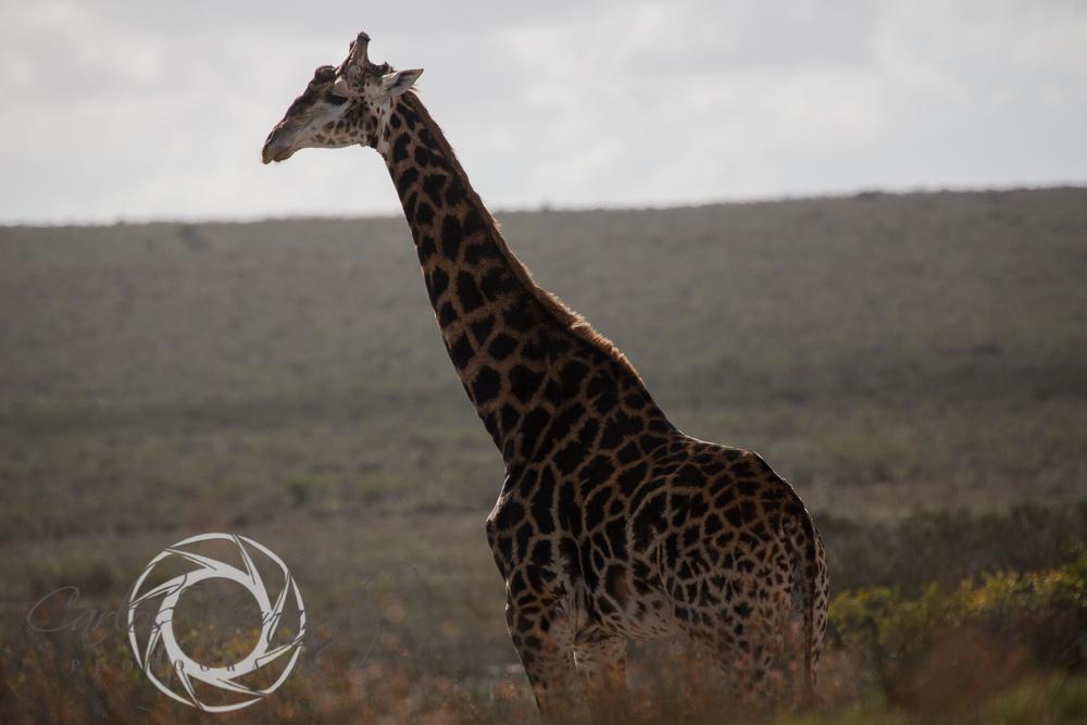20130615_buffalofontein-9.jpg