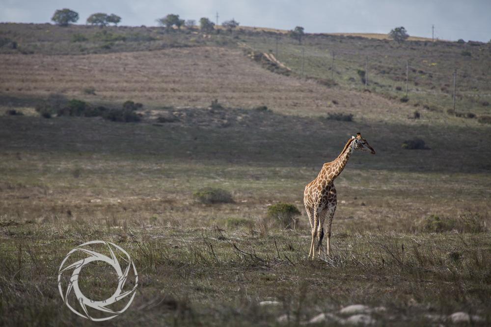 20130615_buffalofontein-5.jpg
