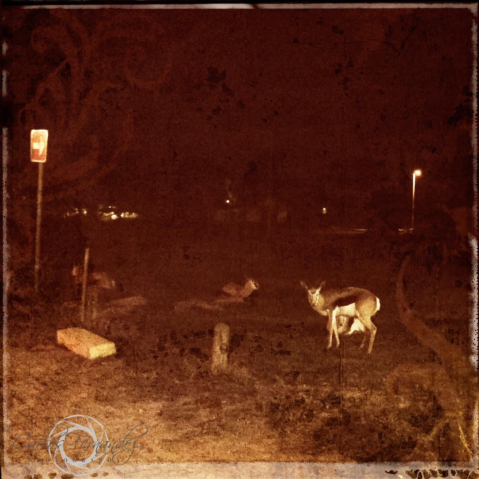 Springbok Night Encounter - 170/365