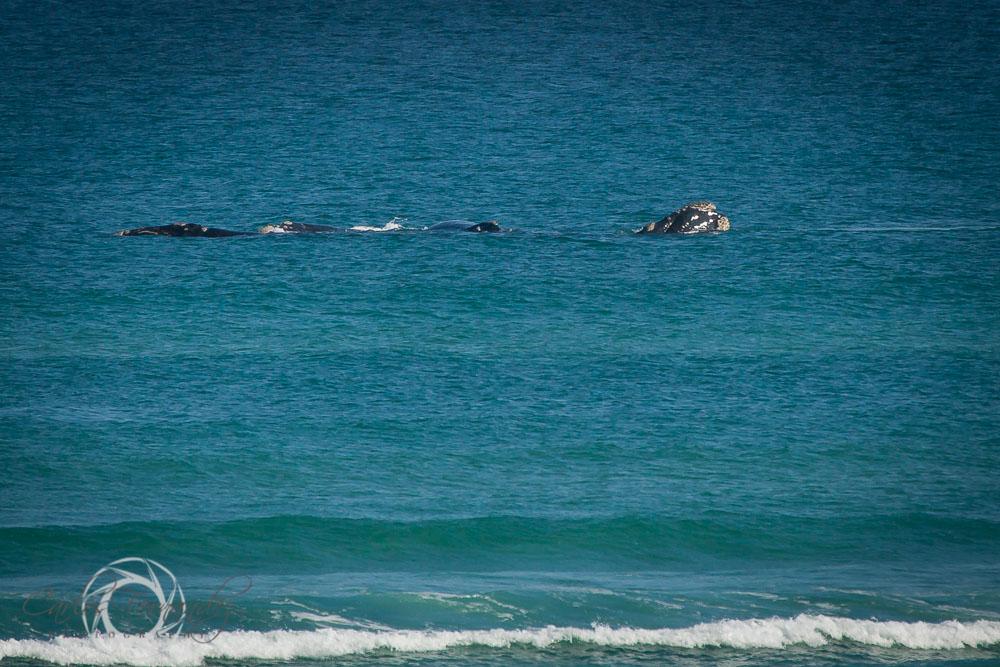 20140808_whales_1.jpg