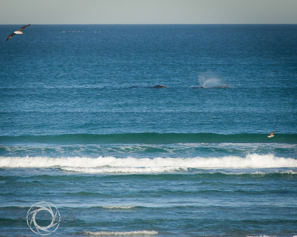 20140808_whales_3.jpg