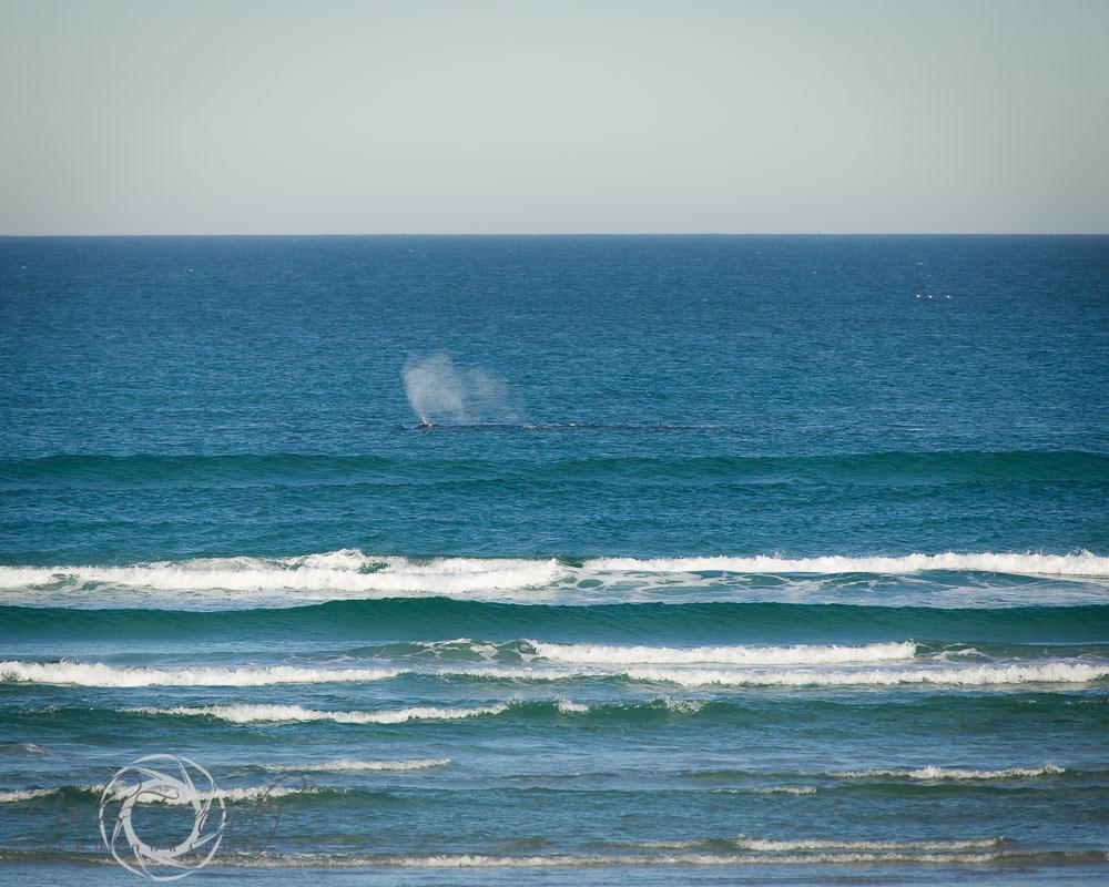 20140808_whales_5.jpg
