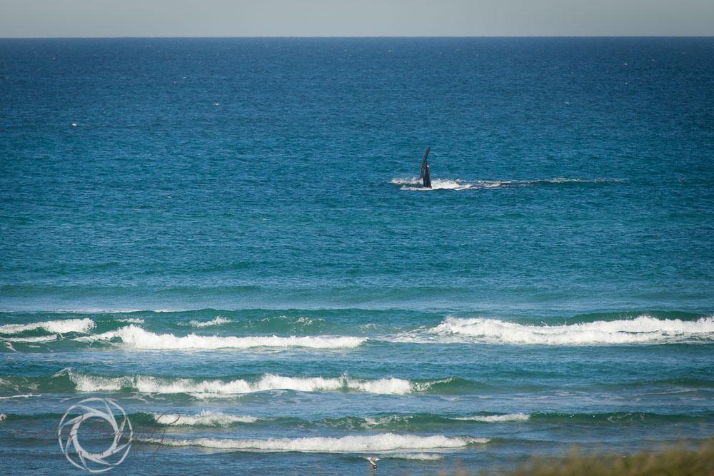 20140808_whales_8.jpg