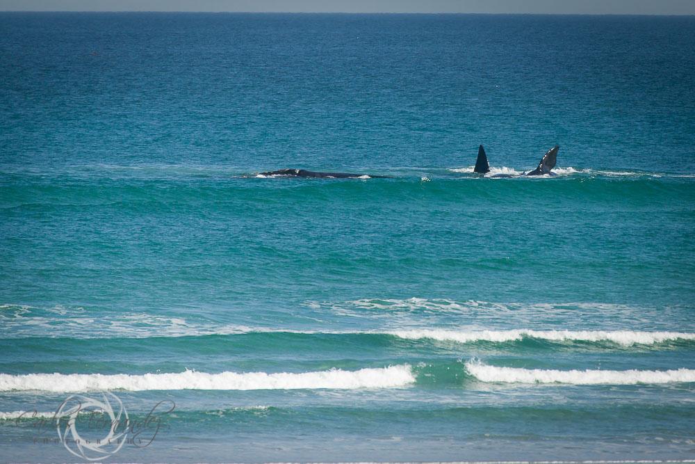 20140808_whales_12.jpg