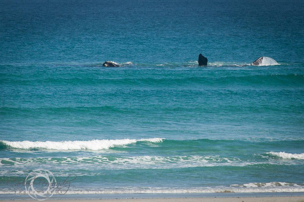 20140808_whales_15.jpg