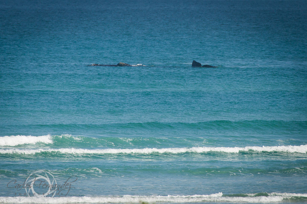 20140808_whales_16.jpg