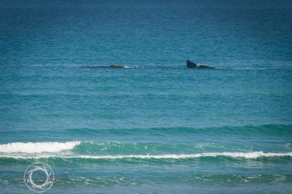 20140808_whales_18.jpg