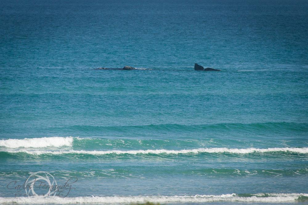 20140808_whales_17.jpg