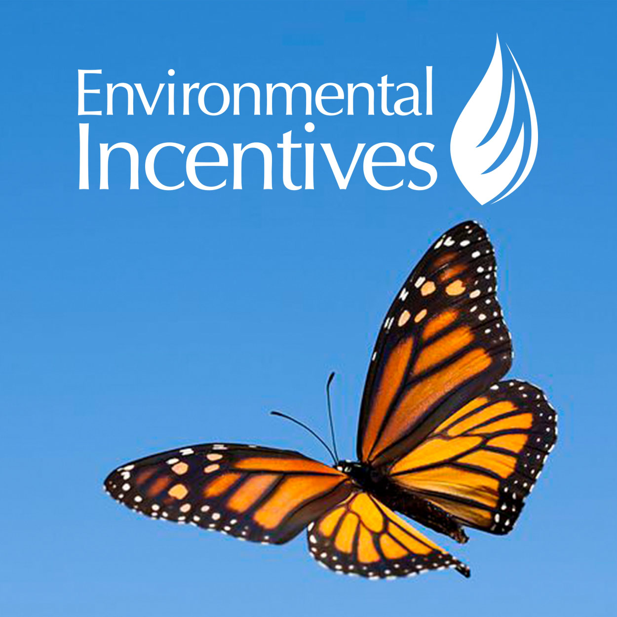 Environmental Incentives | UX Design   The monarch butterfly population has plummeted by 70% in the past 2 decades. I worked with Environmental Incentives to figure out how technology can help reverse the endangerment of this species.