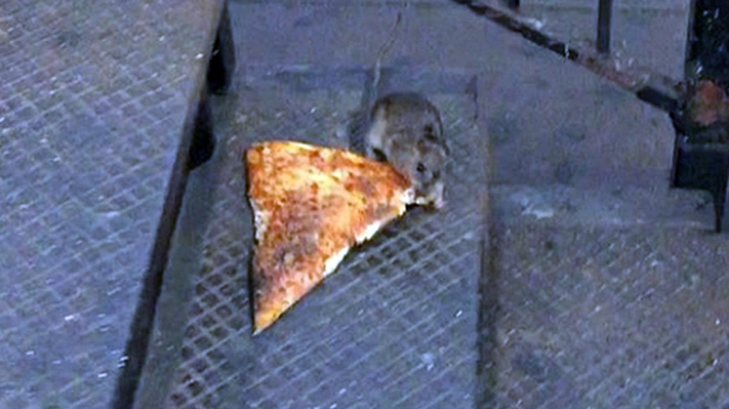 Is New York's Infamous Pizza Rat as Bogus as This Actor Says It Is?  (MUNCHIES, JAN 8 2016)