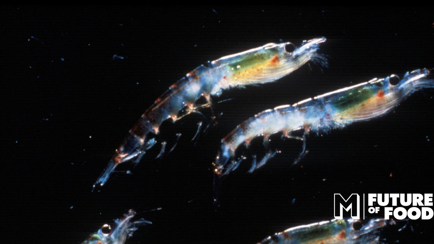 What If We Had All Listened to NASA and Started Eating Krill?  (MUNCHIES, OCT 4 2016)