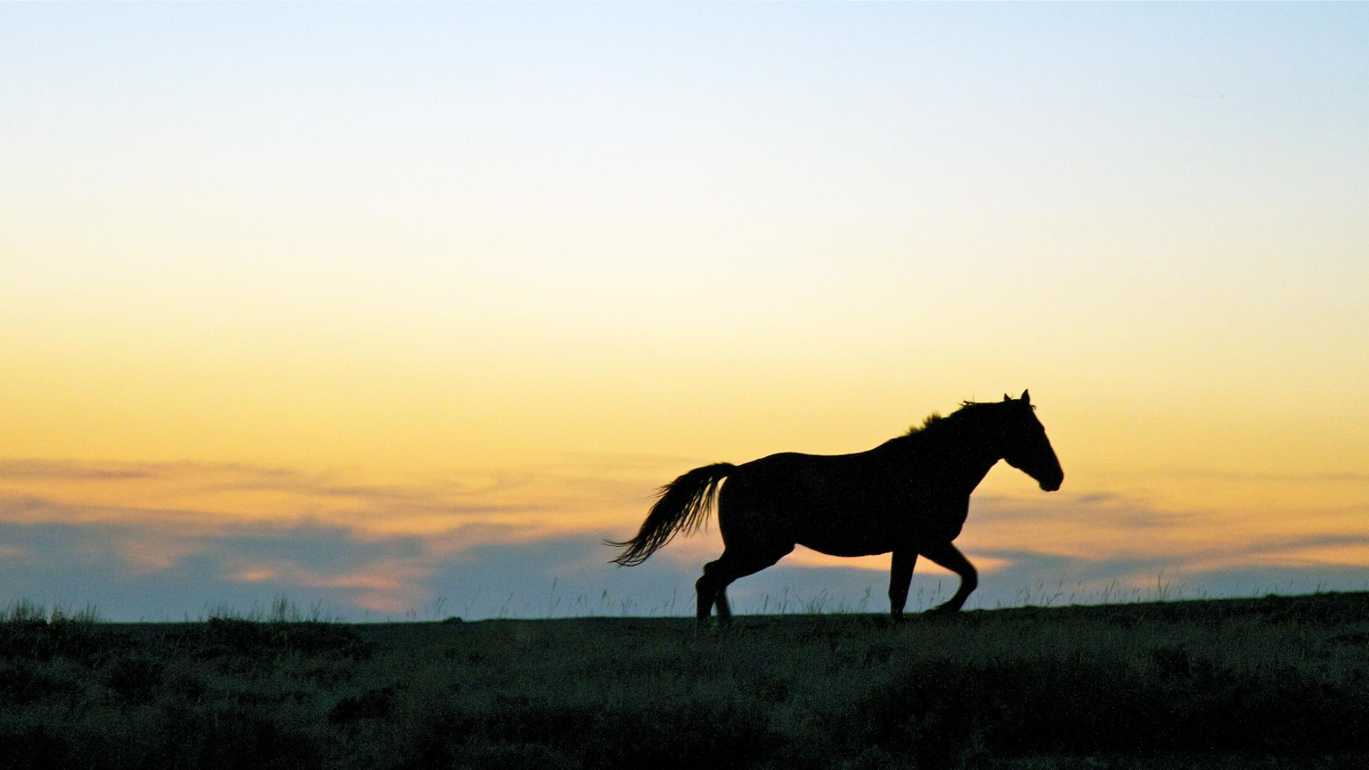 The Controversial Plan to Kill 45,000 Wild Horses to Make Room for Cattle Farming  (MUNCHIES,SEP 14 2016)