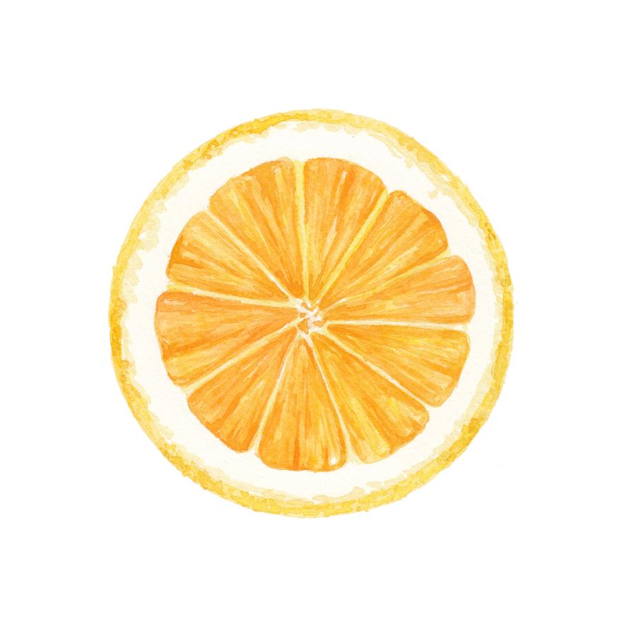 Navel Orange Cross Section