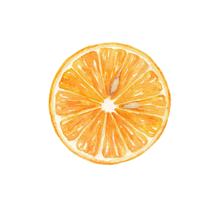 Valencia Orange Cross Section