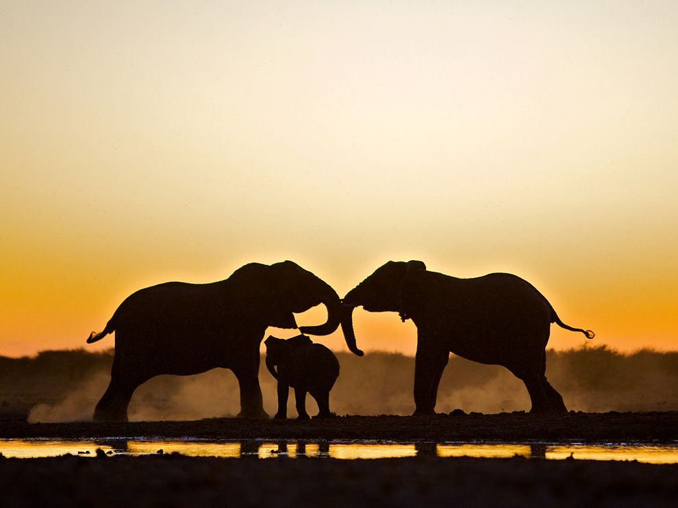 Elephant Trio, Namibia. Photograph by Susan McConnell, Your Shot (via National Geographic)