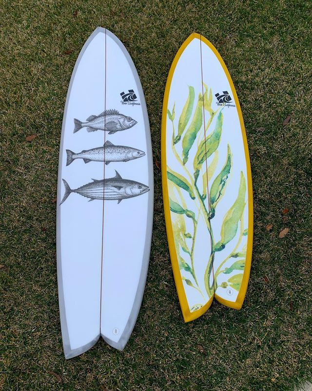 Important ecosystem dynamics right here! #asymlove . . #haze #hazesurf #hazesurfboards #surf #customsurfboards #designsbyhaze #surfdesign #surfboard #asymmetricalsurfboards