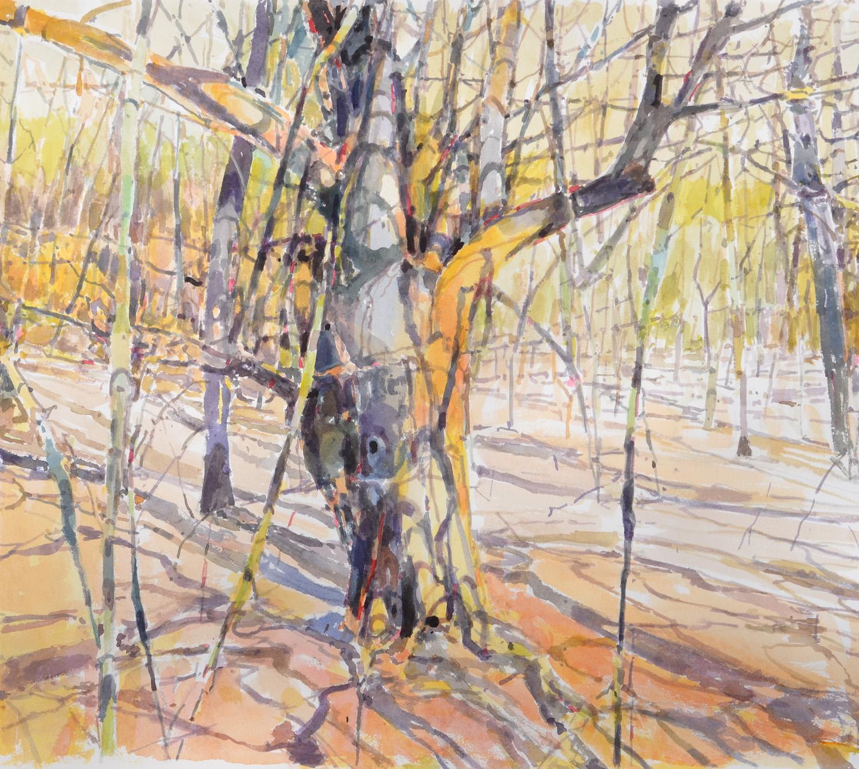 """Old Apple,  William Chickillo, 22"""" x 25"""" watercolor"""
