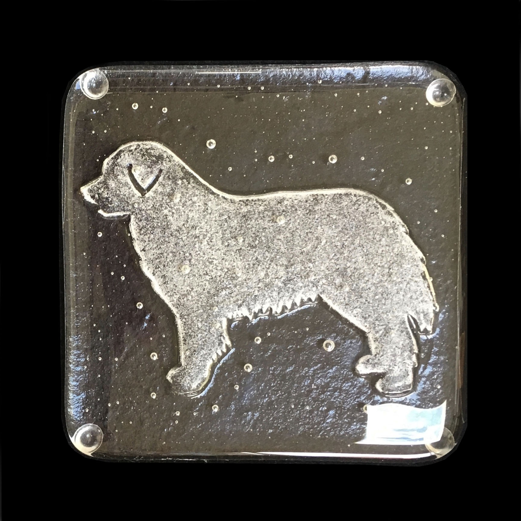 doggy 2.jpg