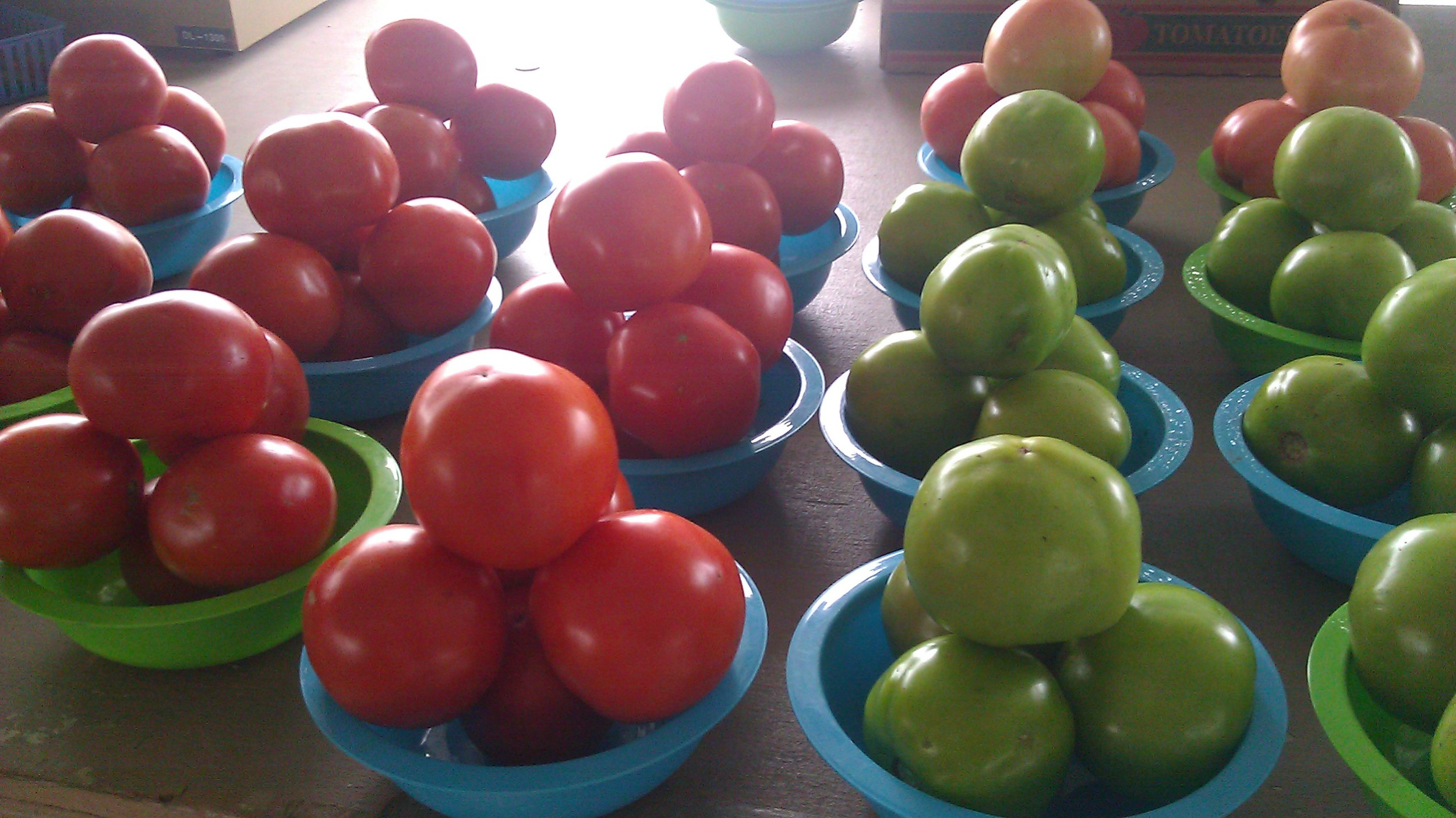 Tomatoes from the local farm stand.