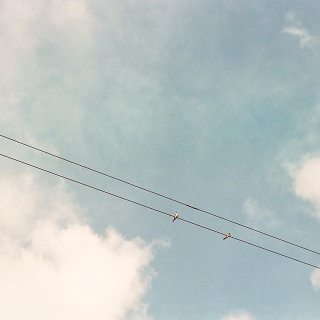 Put a bird on it. . . . . . . #minimalism42 #rsa_minimal #minimalism #vsco #minimalha #tv_simplicity #birds